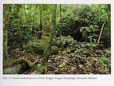 Interior lowland forest on Pulau Tenggol, Tenggol Archipelago, Peninsular Malaysia.