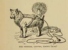 Dog harness, Central Eskimo.