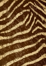 Zebra fur.