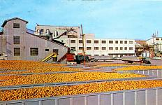 Postcard of Minute Maid plant in Auburndale, Florida, about 1960
