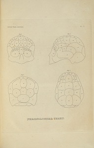 Phrenological Chart.