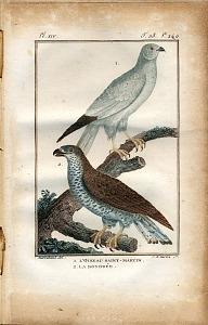 1. L'Oiseau Saint-Martin. 2. La Bondrée.