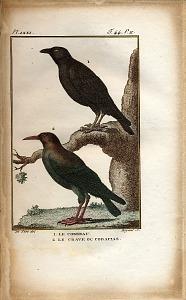 1. Le Corbeau. 2. Le Crave ou Coracias.
