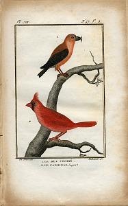 1. Le Bec Croisé. 2. Le Cardinal huppe.