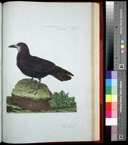 Plate 148: The Rook