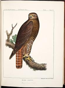 Birds--Plate XIV