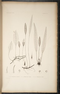 Plate 9