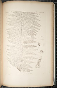 Plate 39