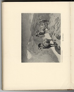 p. 72 Mountain sheep