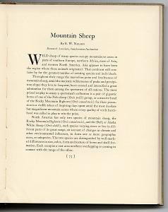 p. 73 Mountain sheep description