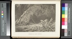 Surveyor's hut, Darien expedition