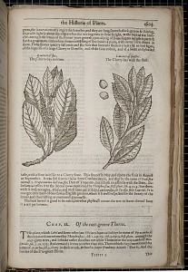The Historie of Plants