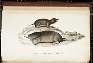 1 Short Tail Shrew. 2 Small Shrew 3 Shrew Mole.