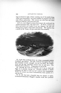 Porpoise in a Gale