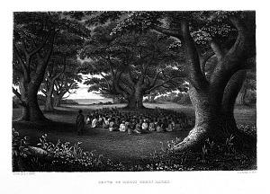 Grove of Kukui Trees, Kakuai