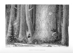 Pine Forest, Oregon