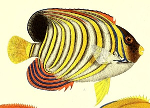 Fish scales.