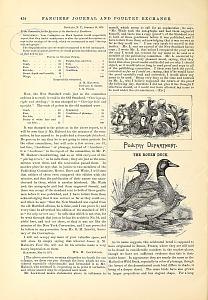 The Rouen Duck