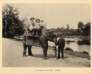 The riding elephant