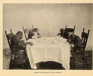 Educated Orang-Utans dining.