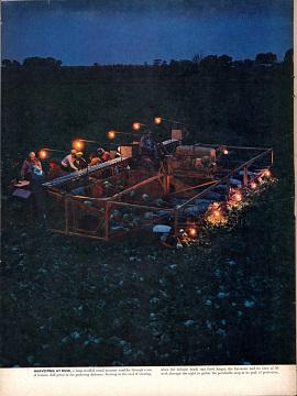Machine harvesting, 1955