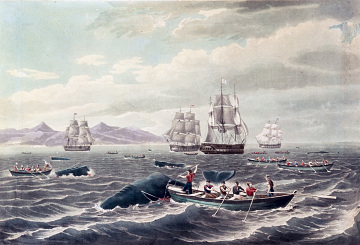 Whaling off the Island of Hawai'i, 1833