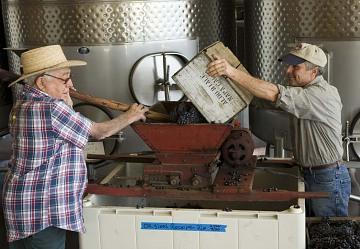 Crushing grapes, 2008