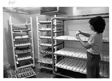 Checking the cheese in process, about 1980