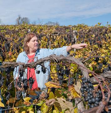 Jennifer McCloud surveying her Norton vineyard, 2011