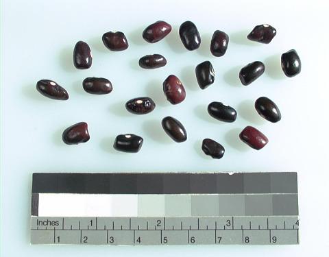 Image 1 for Bean/beans