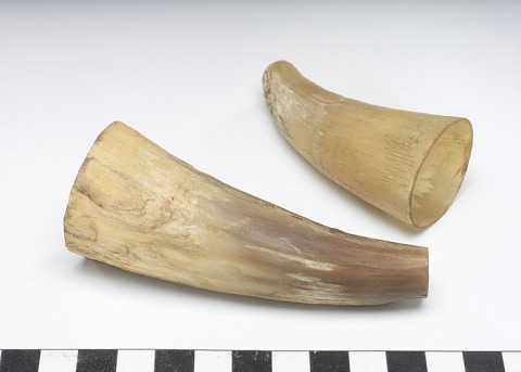 Image 1 for Cupping horn