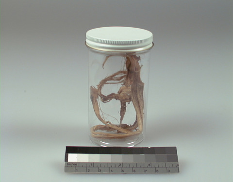 Image 1 for Sinew