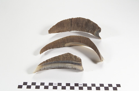 Image 1 for Horn