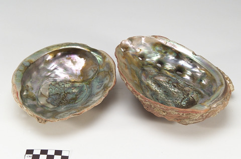Image 1 for Shell