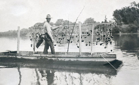 Harvesting mussels in Indiana, about 1911