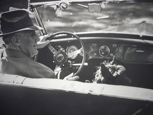 FDR drives his car, accompanied by his dog, Fala