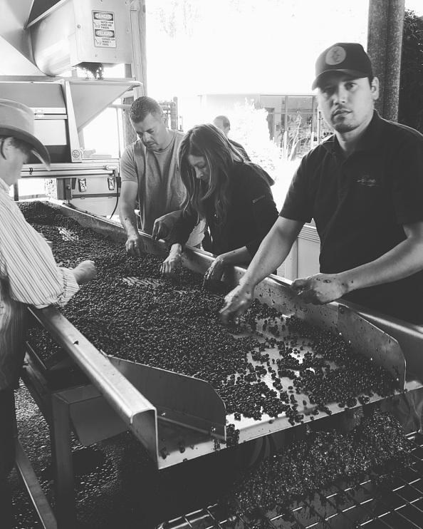 Alex Llamas and family sorting grapes, around 2015