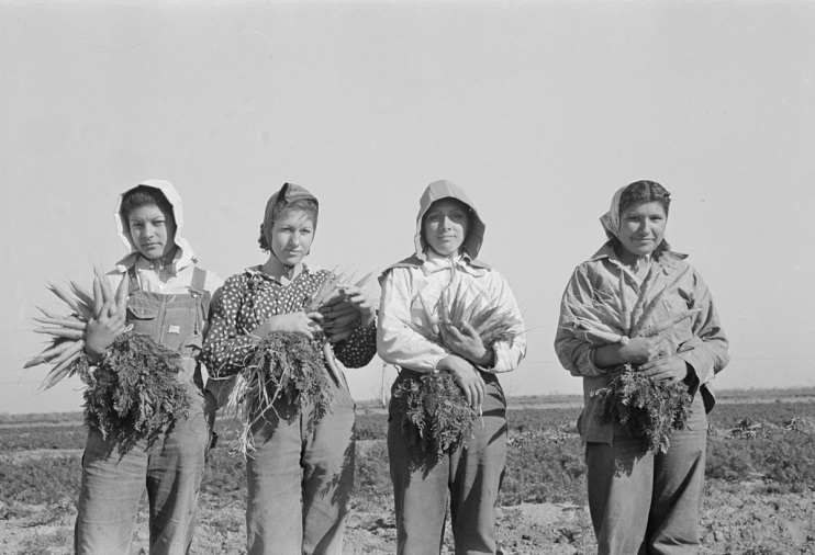 Young Girls Harvesting Carrots in Edinburg, Texas, 1939