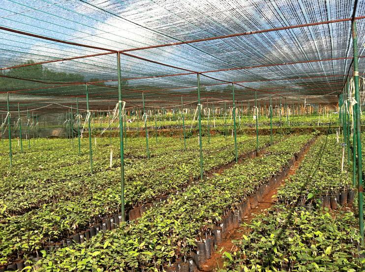 Cacao research nursery, Vietnam, 2014