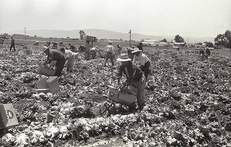 Braceros in the Salinas Valley, 1956