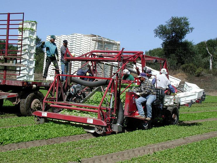 Lettuce harvester, 1999