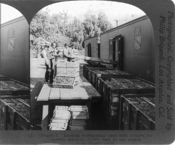 Loading grapes onto reefer train