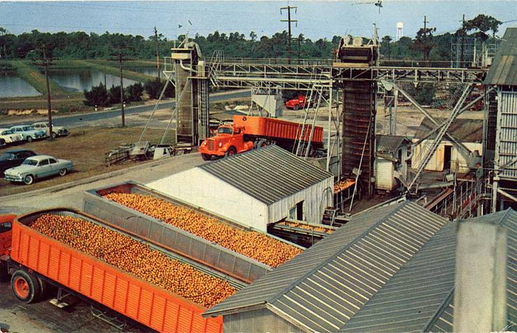 Postcard of Minute Maid plants in Frostproof, Florida, about 1960