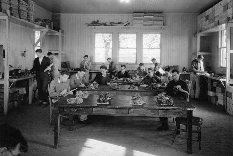 Viticulture students at Davis, around 1940