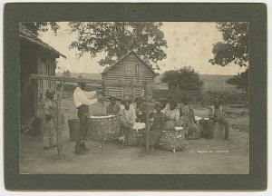 Image for No. 44, Weighing Cotton