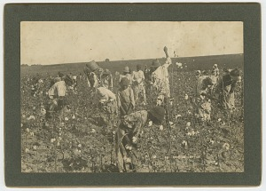 Image for No. 86, Picking Cotton