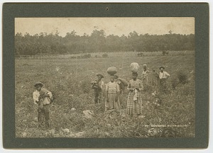 Image for Gathering Watermelons