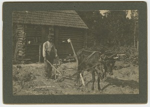 Image for No. 40, Ploughing With Ox