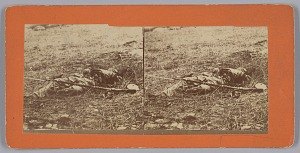 Image for Stereograph of a deceased soldier on the battlefield after Gettysburg