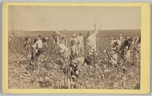 Image for No. 19, Cotton Picking